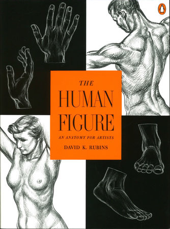 The Human Figure by David K. Rubins