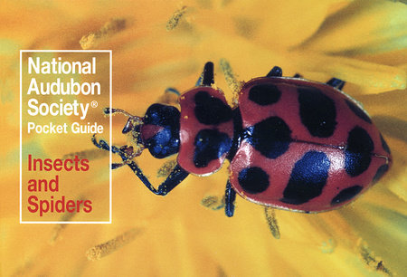 National Audubon Society Pocket Guide: Insects and Spiders