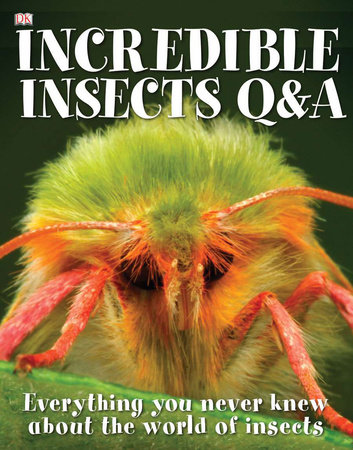 Incredible Insects Q & A by Sally Tagholm