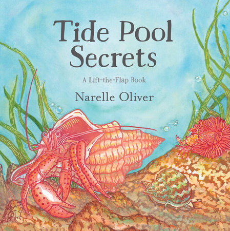 Tide Pool Secrets by Narelle Oliver