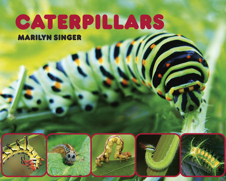 Caterpillars by Marilyn Singer