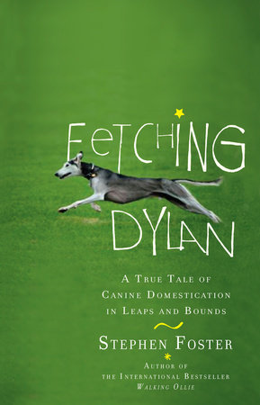 Fetching Dylan by Stephen Foster