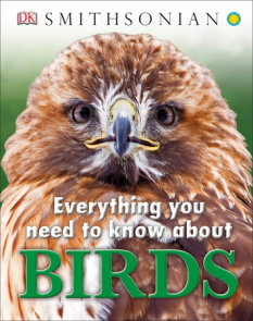 Everything You Need to Know About Birds