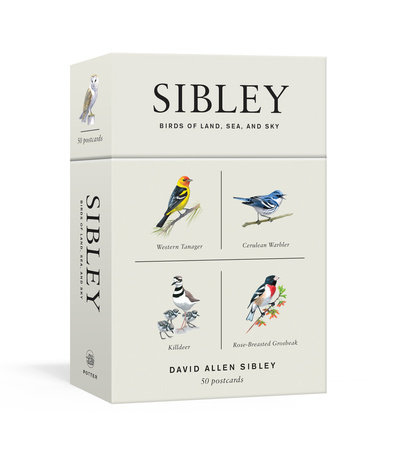 Sibley Birds of Land, Sea, and Sky by David Allen Sibley