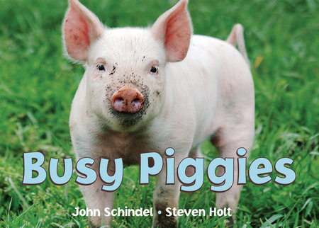 Busy Piggies by John Schindel