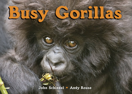 Busy Gorillas by by John Schindel; photographs by Andy Rouse