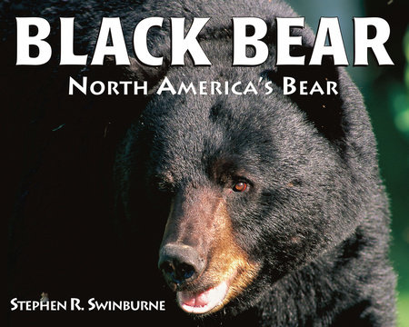 Black Bear by Stephen R. Swinburne