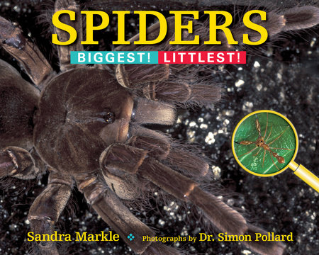 Spiders by Sandra Markle