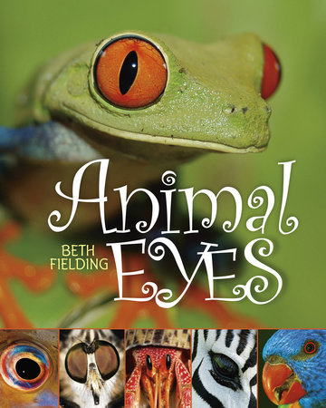 Animal Eyes by Beth Fielding